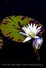 EOS DIGITAL REBEL XTi_20080716_0039-edit