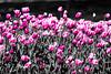 EOS DIGITAL REBEL XTi_20080428_0350_edit-edit