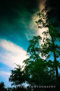 Forest_Park-20120728-210-58