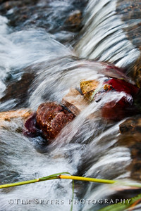 Forest_Park-20120728-210-37