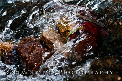 Forest_Park-20120728-210-33