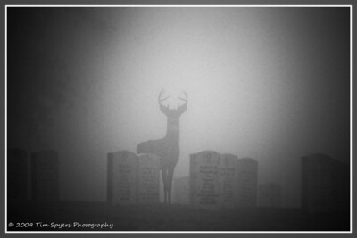 JB_Cemetery-20091121-251