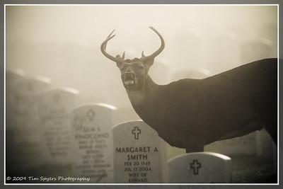 JB_Cemetery-20091121-319