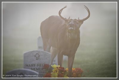 JB_Cemetery-20091121-302