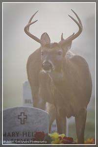 JB_Cemetery-20091121-307