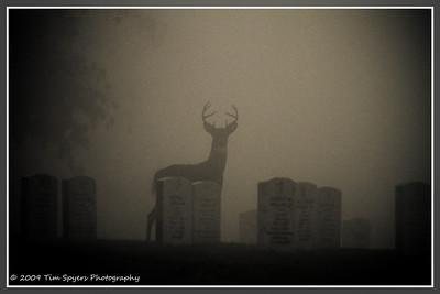 JB_Cemetery-20091121-248