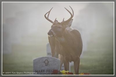 JB_Cemetery-20091121-305