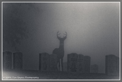 JB_Cemetery-20091121-253