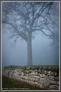 JB_Cemetery-20091121-106
