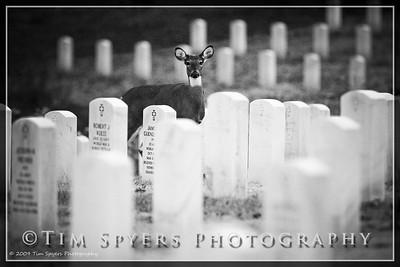 JB_Cemetery-20091120-155