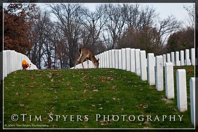 JB_Cemetery-20091120-7