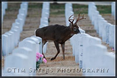 JB_Cemetery-20091120-157