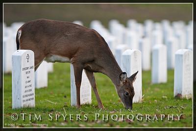 JB_Cemetery-20091120-89
