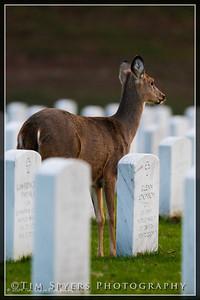 JB_Cemetery-20091120-99