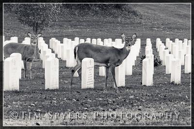 JB_Cemetery-20091120-3