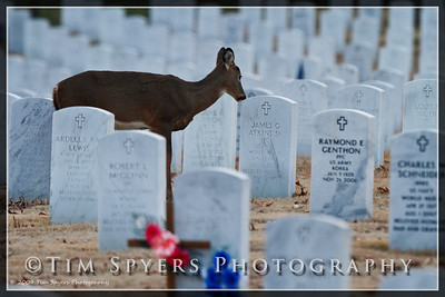 JB_Cemetery-20091120-143