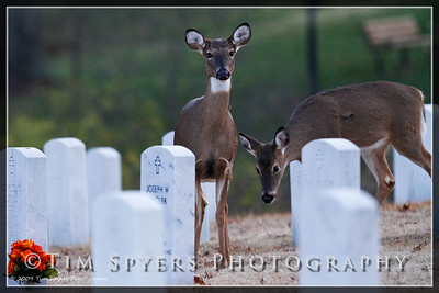 JB_Cemetery-20091120-195