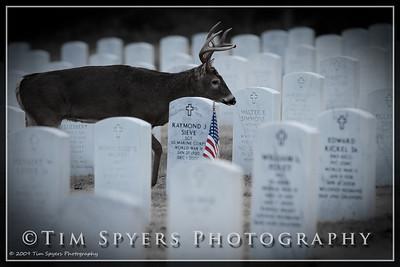 JB_Cemetery-20091120-169