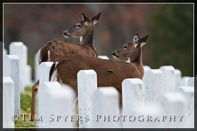 JB_Cemetery-20091120-128