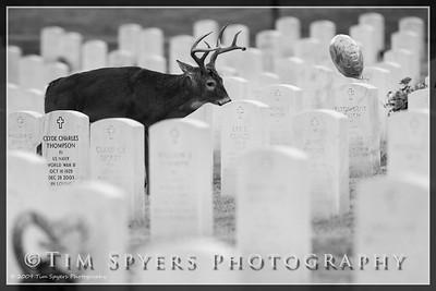 JB_Cemetery-20091120-163