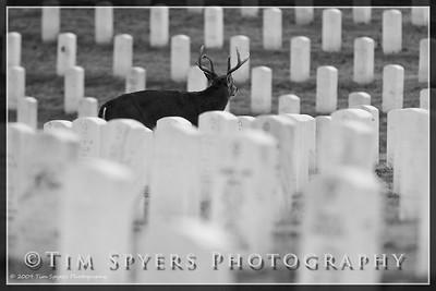 JB_Cemetery-20091120-153