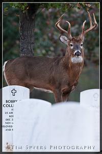 JB_Cemetery-20091120-175