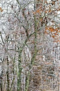 snow_day-20110201-032-24