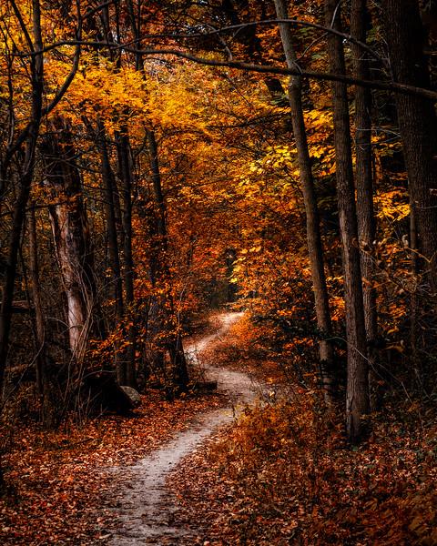 The Narrow Path