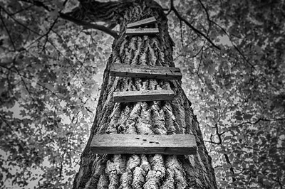 Ladder to the Treehouse