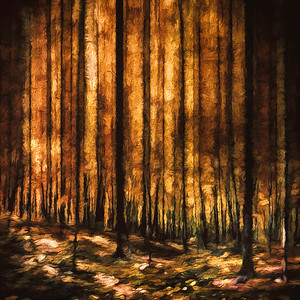 The Silent Woods