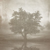A Tree in the Fog 3