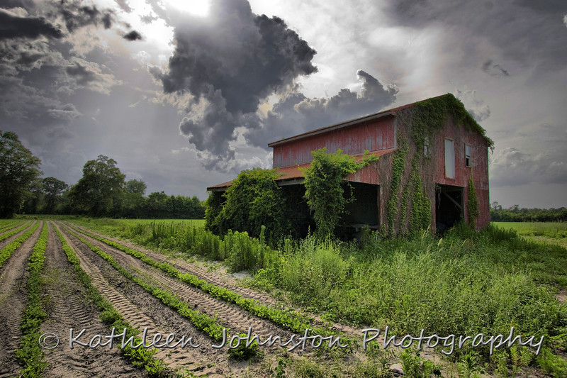 Vine covered barn in approaching storm, Swansboro, NC, USA