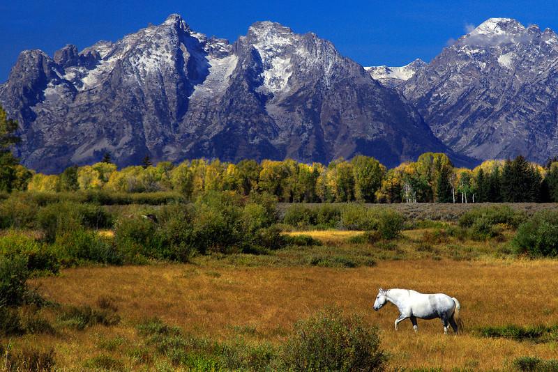 White Horse, Tetons