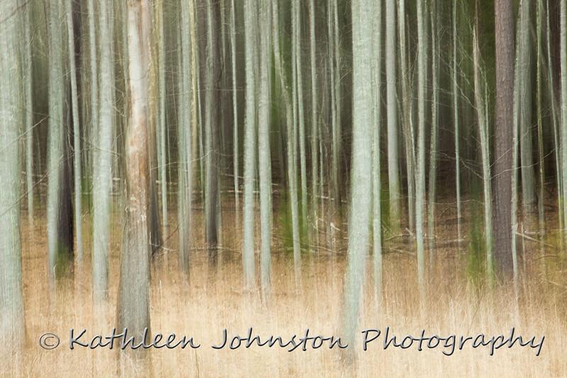 Quiet Forest,TN_