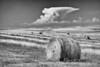 Hay bales in the Sandhills of Nebraska.