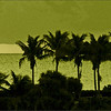 Sunrise over Palms, Green painting effect
