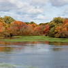Mill Pond, Sayville in Autumn