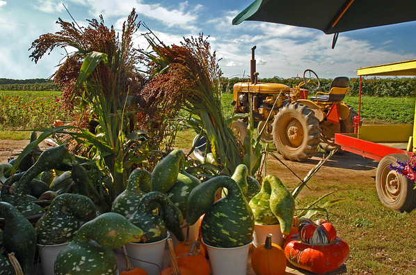 Tractor and Farmstand, Autumn on Long Island