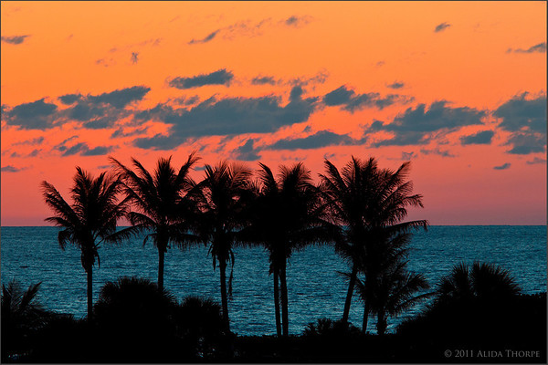 sunrise over palms