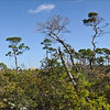 Natural Vegetation, Jupiter, Florida