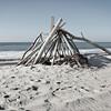 Driftwood on Fire Island