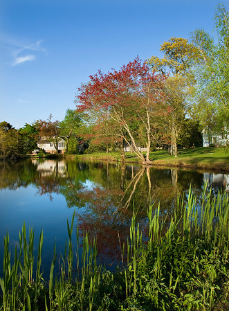 Pond on Long Island, Early Spring