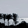 Palms and the ocean