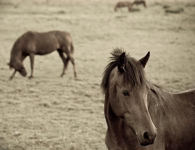 Horses near Mohonk Preserve in summer