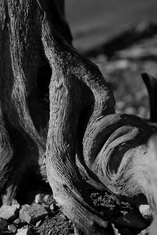 Woven Wood
