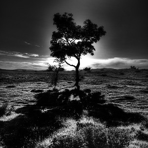 Silhouetted Tree, Scout Scar, Kendal, Cumbria, UK