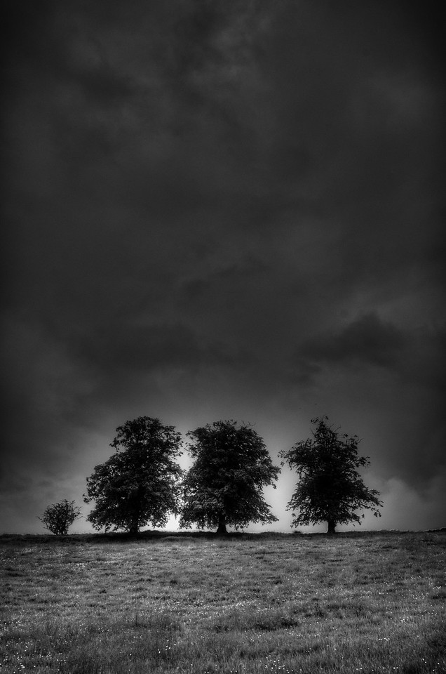 Trees standing sentinel on the horizon, Ratherheath Lane, Kendal, Cumbria, UK