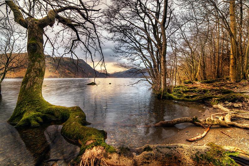 Snaking Tree Root, Ullswater, Cumbria, UK