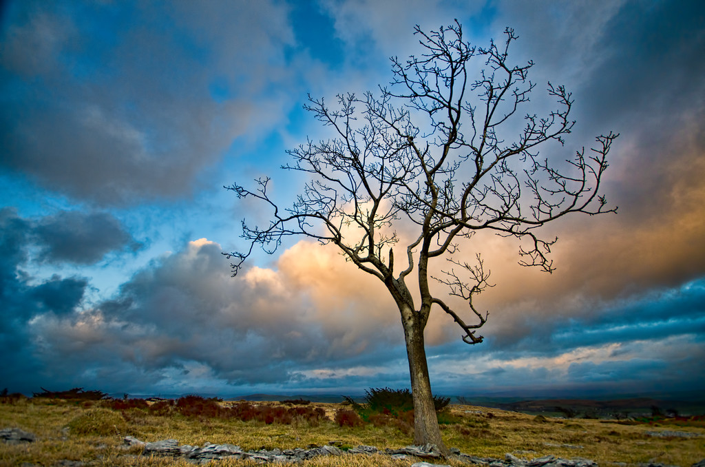 I raced up Scout Scar this evening to see what the sunset would be like, I did get there in time, but it wasn't quite as spectacular as I'd anticipated. The cloud was just a bit too dense. This one is looking away from the sun to the East were the clouds were a perfect orange and this singular tree cried out to be photographed. HDR from a single file.