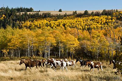 Mountain Horses